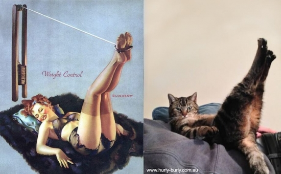 cats that look like pin up girls 8