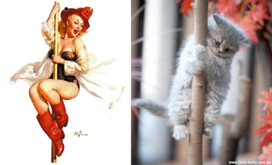 cats that look like pin up girls 9