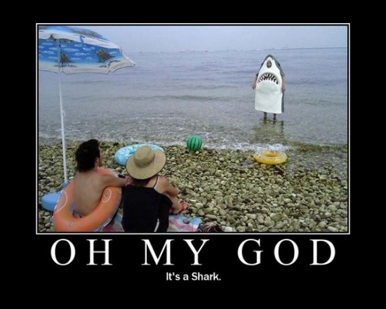 oh my god shark2