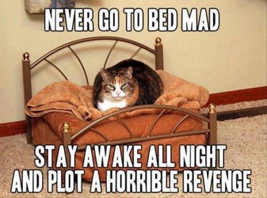 stay awake and plot revenge