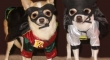 Batman and Robin the dogs