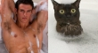 Cats That Look Like Male Models 13