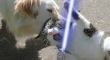 Cats with lightsabers 14