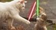 Cats with lightsabers 15