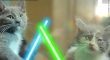 Cats with lightsabers 18