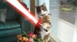 Cats with lightsabers 24