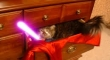 Cats with lightsabers 31