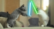 Cats with lightsabers 43