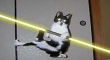 Cats with lightsabers 5