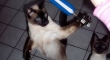 Cats with lightsabers 7