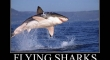 Flying Sharks2