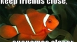 Keep Friends Close Anenomes Closer