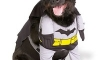 The Batdog