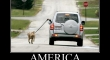 Walking the dog The America way2