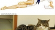 cats that look like pin up girls 20
