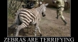 zebras are terrifying2