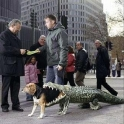 Alligator Dog Costume