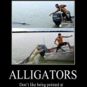 Alligators Dont Like Being Pointed At2