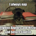 Always nap between algebra and history