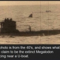 An extinct Megalodon
