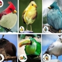 Angry Birds For Real