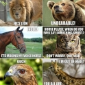 Animals Trolling