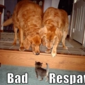 Bad Respawn