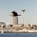 Bird On Seattle