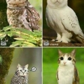 Cat combined with an Owl