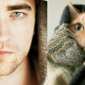 Cats That Look Like Male Models 10