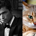 Cats That Look Like Male Models 16
