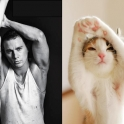 Cats That Look Like Male Models 8