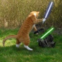 Cats with lightsabers 10