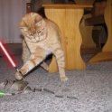Cats with lightsabers 13