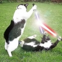 Cats with lightsabers 19