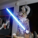 Cats with lightsabers 2