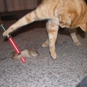 Cats with lightsabers 20