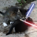 Cats with lightsabers 22