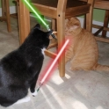 Cats with lightsabers 25