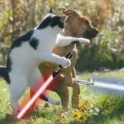 Cats with lightsabers 28