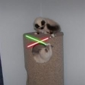 Cats with lightsabers 29