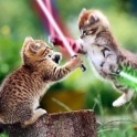Cats with lightsabers 3