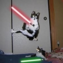 Cats with lightsabers 30