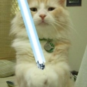 Cats with lightsabers 35
