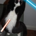 Cats with lightsabers 36