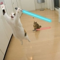 Cats with lightsabers 37