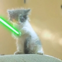 Cats with lightsabers 39