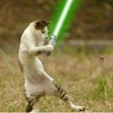 Cats with lightsabers 40