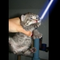 Cats with lightsabers 44