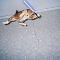 Cats with lightsabers 6